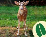 5-9_Learn_deer