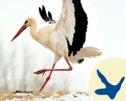 5-9_Learn_stork