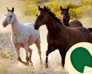 5-9_Learn_wild-horse