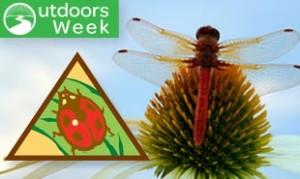 Brownie Bugs badge on Badge Explorer